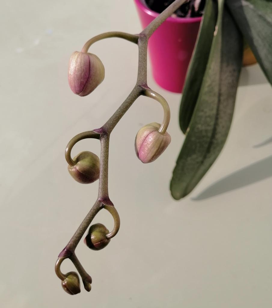 fleur_grossesse-shiatsu-Marie-Claire Michaud