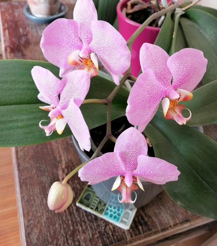 floraison_grossesse-shiatsu-Marie-Claire Michaud